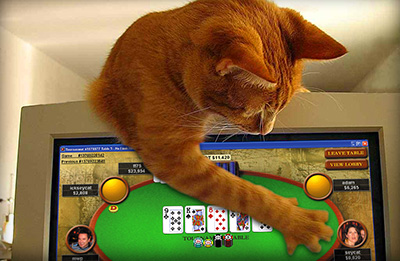 This kitty plays online poker. Yes he does.